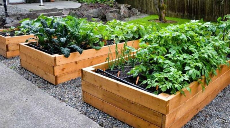 Cultivar Un Huerto En Terrazas Cultivar Mi Huerto