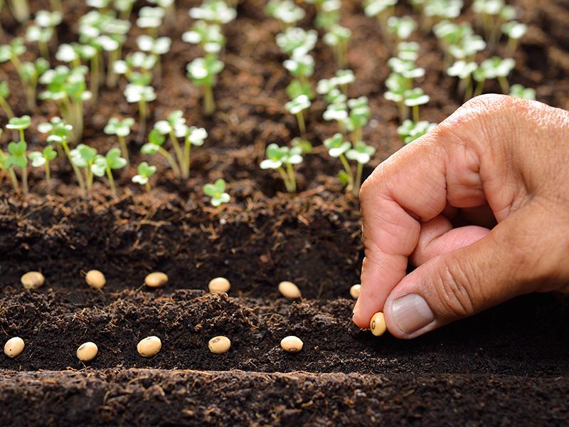 Las semillas que plantes deben ser siempre de calidad