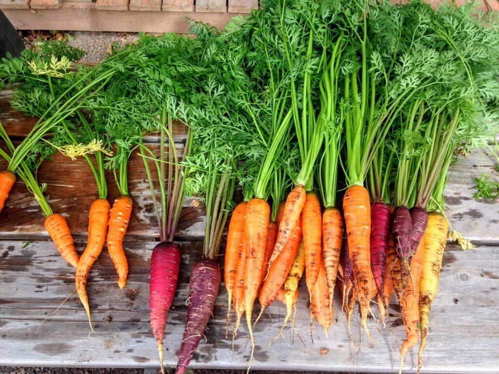 colores de las zanahorias